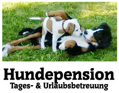 Hundepension-Tages--Urlaubsbetreuung