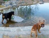Großer Auslauf mit Badeteich