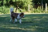 Geführte Hundespielgruppe