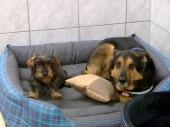 Unsere Hundezimmer für die Wohnungshunde
