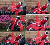Weihnachten 2012_10
