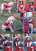 Weihnachten 2012_5