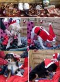 Weihnachten 2012_7