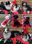 Weihnachten 2012_9