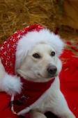 Weihnachtsfotos Foto_16