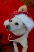 Weihnachtsfotos Foto_18