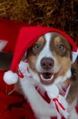 Weihnachtsfotos Foto_1