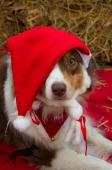 Weihnachtsfotos Foto_26