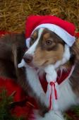 Weihnachtsfotos Foto_29