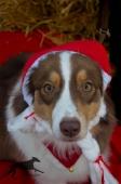 Weihnachtsfotos Foto_4