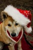 Weihnachtsfotos Foto_5