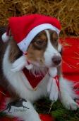 Weihnachtsfotos Foto_6